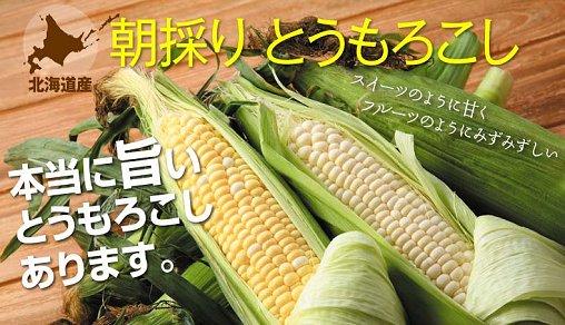 【野菜】について
